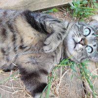 A esos seres maravillosos llamados gatos